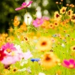 Boglár Virág