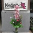 Medinilla Virágművészet