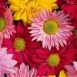 Dunnyus Virágüzlet