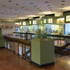 Budapesti Történeti Múzeum (Vármúzeum)