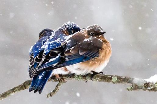 Kép: Birds & Blooms