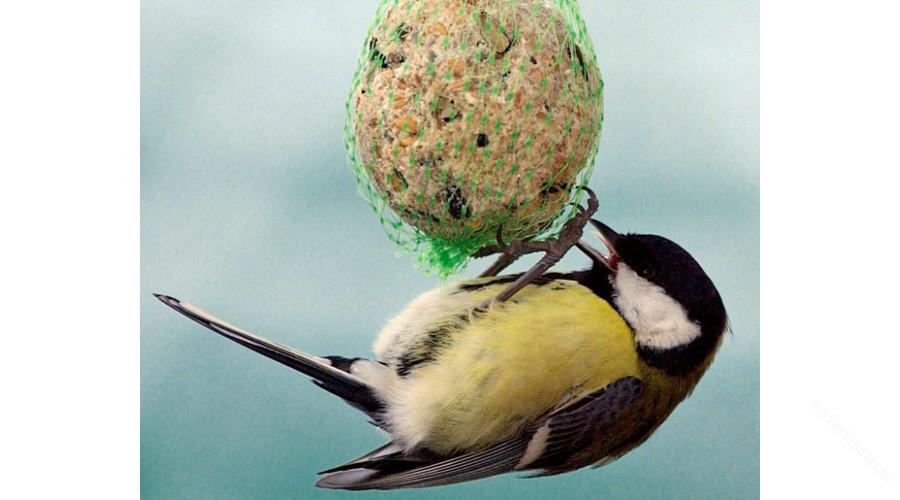 Fotó: biokertápolás
