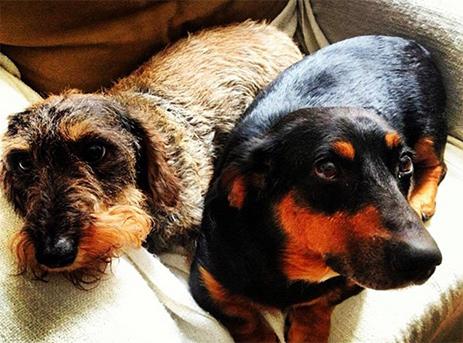 A két kutyus, fotó: 444